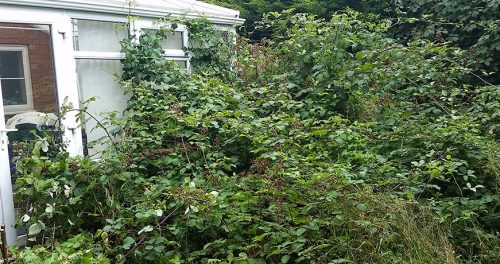 Garden Clearance (Bramble Removal)