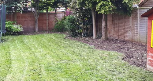 Garden Tidy and Clearance